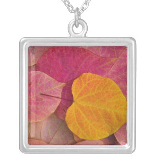 Fall color on Forest Pansy Redbud fallen Silver Plated Necklace