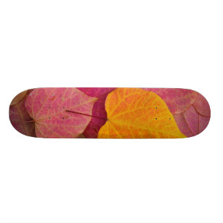 Fall color on Forest Pansy Redbud fallen Skateboard