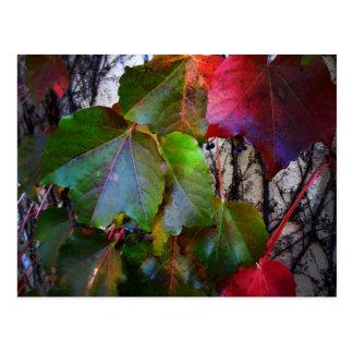 Fall Color Postcard