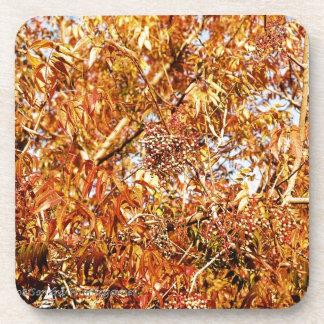 Fall Color Profusion Beverage Coaster