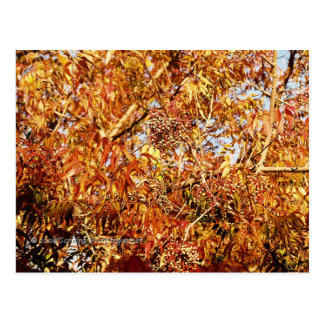 Fall Color Profusion Postcard