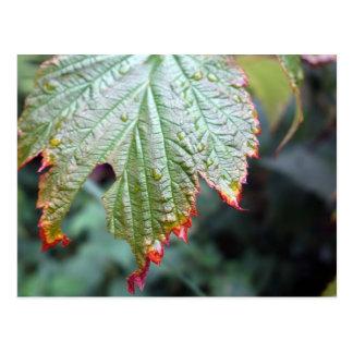 Fall - Colored leave Postcard