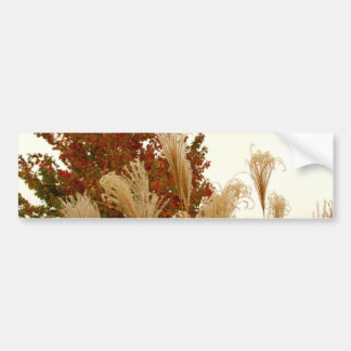 Fall Colors Autumn Season Nature Photography Bumper Stickers