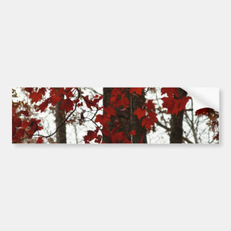 Fall Colors Autumn Trees Red Canadian Maple Leaves Bumper Sticker