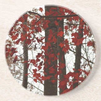Fall Colors Autumn Trees Red Canadian Maple Leaves Coasters