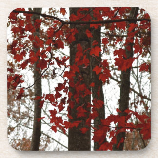 Fall Colors Autumn Trees Red Canadian Maple Leaves Beverage Coaster