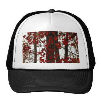 Fall Colors Autumn Trees Red Canadian Maple Leaves Mesh Hats