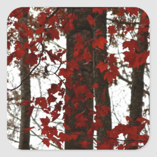 Fall Colors Autumn Trees Red Canadian Maple Leaves Square Sticker