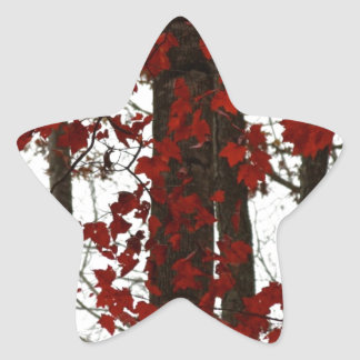 Fall Colors Autumn Trees Red Canadian Maple Leaves Star Sticker