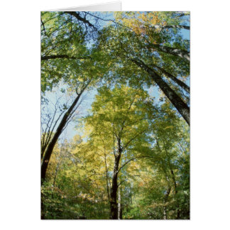 Fall Colors - Great Smoky Mountains - Trees Greeting Cards