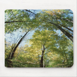 Fall Colors - Great Smoky Mountains - Trees Mouse Pad