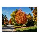 Fall Colors in Cincinnati Greeting Card