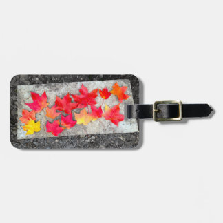 Fall Colors Maple Leaves Thanksgiving Luggage Tag