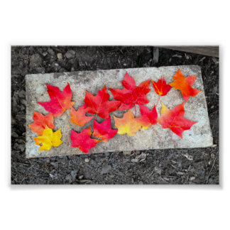 Fall Colors Maple Leaves Thanksgiving Photo Print