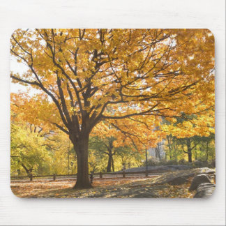 Fall colors mouse pad