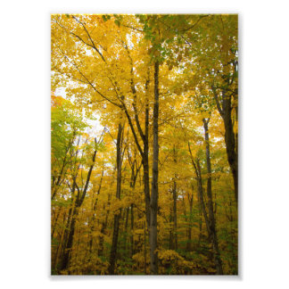 Fall colors, Munising, Michigan Photo Print