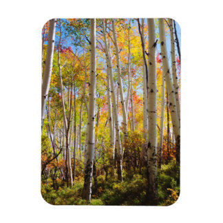 Fall colors of Aspen trees 5 Magnet