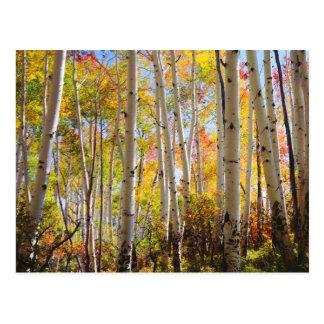 Fall colors of Aspen trees 5 Postcard