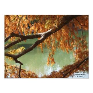 Fall Colors Photo