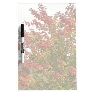 Fall Colors Photo Autumn Trees Leaves Dry Erase Whiteboards