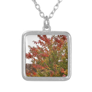 Fall Colors Photo Autumn Trees Leaves Jewelry