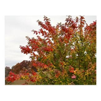 Fall Colors Photo Autumn Trees Leaves Postcard