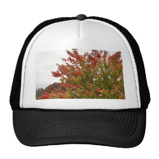 Fall Colors Photo Autumn Trees Leaves Trucker Hats