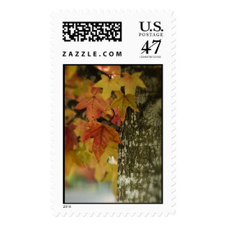 Fall Colors Postage Stamp