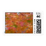 Fall Colors Postage Stamps