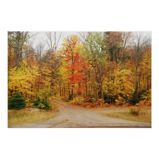 Fall Colors Posters