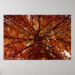 Fall Colors Print