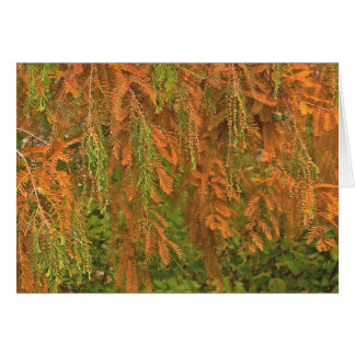 FALL COLORS (TREE-ORANGES AND GREENS) NOTECARD