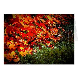 Fall Colours Card