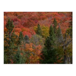 Fall Colours in Autum Season Postcard