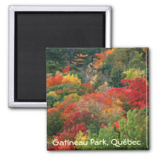 Fall colours in Gatineau Park Magnets