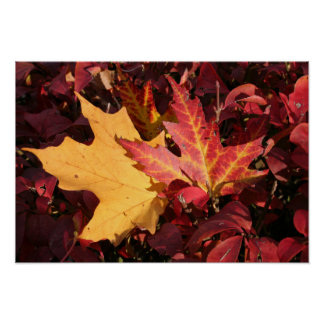 Fall Contrast Poster
