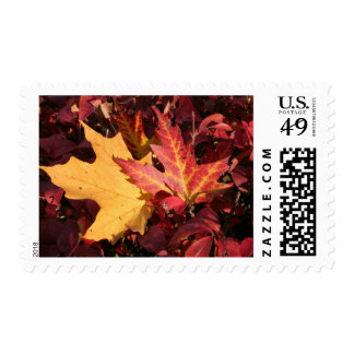 Fall Contrast Stamp
