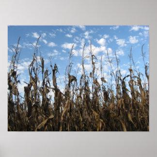 Fall cornfield poster