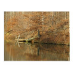 Fall Country Fishing Postcard