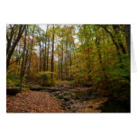 Fall Creek at Laurel Hill State Park Card