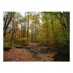 Fall Creek at Laurel Hill State Park Photo Print