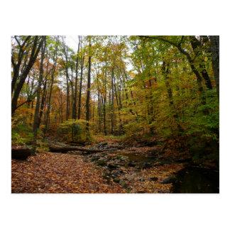 Fall Creek at Laurel Hill State Park Postcard