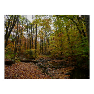 Fall Creek at Laurel Hill State Park Poster
