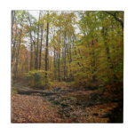 Fall Creek at Laurel Hill State Park Tile