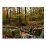 Fall Creek with Reflection at Laurel Hill Park Postcard