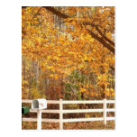 Fall Day postcard