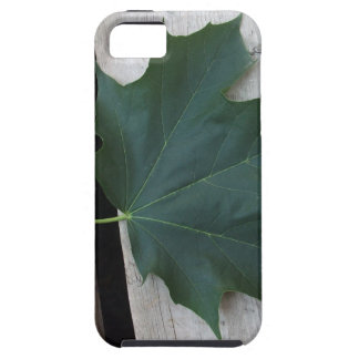 Fall Days iPhone SE/5/5s Case