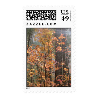 Fall Fantasy (4) Postage Stamps