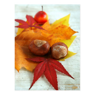 Fall Feelings Postcard
