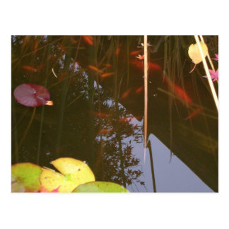 Fall Fish Postcard